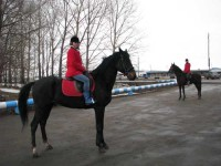 Репродуктор по разведению лошадей русской рысистой породы – особая гордость Мелиоратора