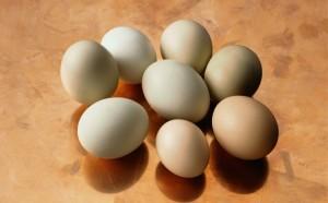 Марксовский район не выполняет план по яйцам