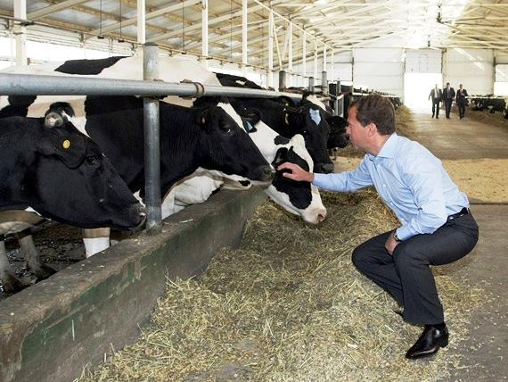 Тульских животноводов опять обделили федеральными субсидиями
