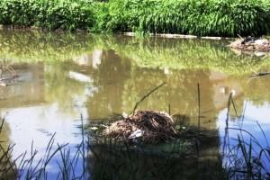 Подлесное тонет в канализационных стоках