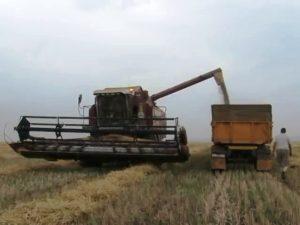 Ход уборки зерновых на 22 июля 16 года в Марксовском районе