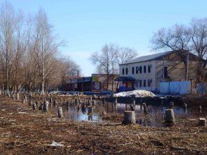 Вырубленная городская аллея, март 2014 года