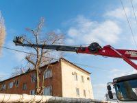 Завершен первый этап ликвидации аварийных деревьев в Марксе