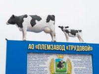 Губернатора интересует реализация крупного инвестпроекта «Трудового»