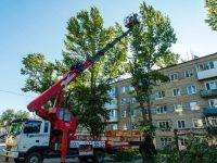 Администрация района обещает посадить новые деревья взамен спиленным