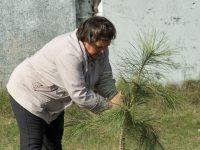В Марксе появятся сосновые сады и леса